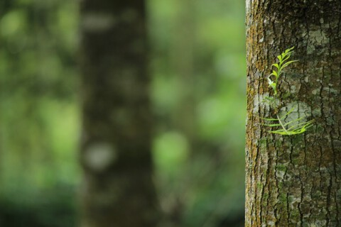 shallow-focus-photography-of-brown-tree-trunk-1250260
